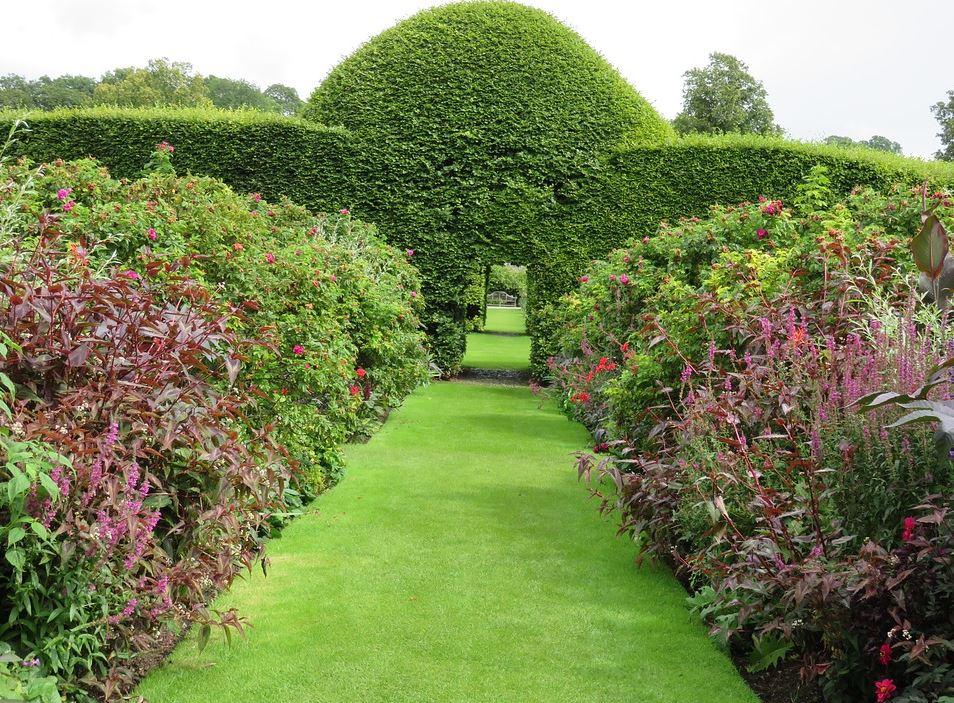 Cele mai potrivite plante pentru garduri vii