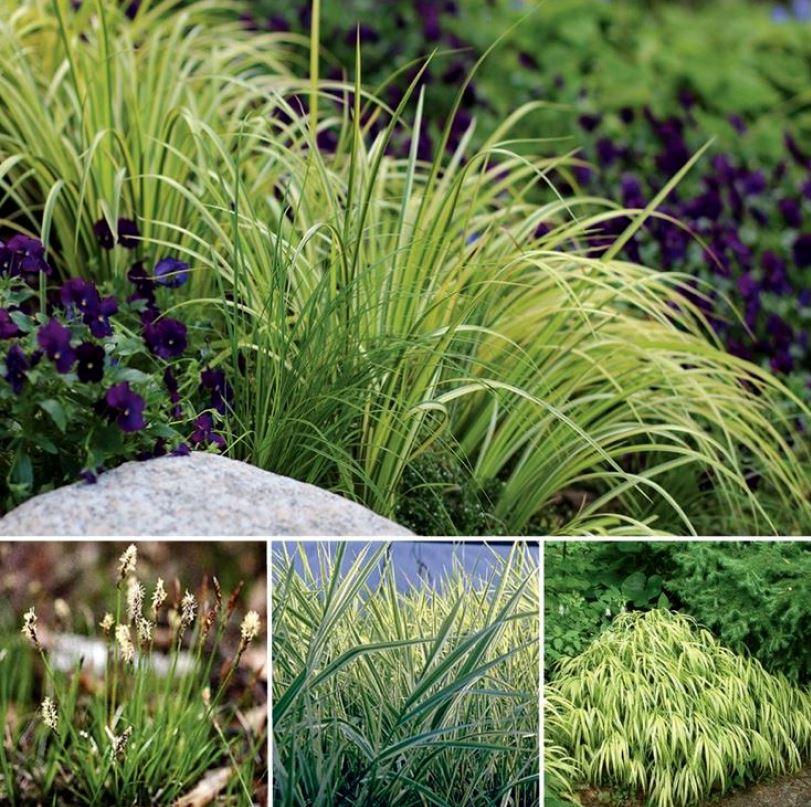 Despre plantarea ierburilor ornamentale in gradina