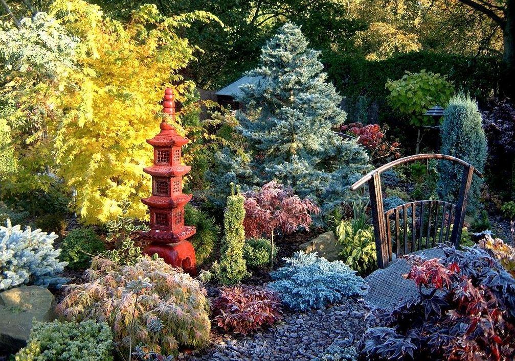 Necesitatea coniferelor in gradina moderna